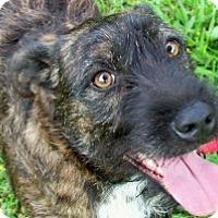 Adopt A Pet :: Victoria - Oakland, AR