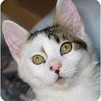 Adopt A Pet :: Earl - Davis, CA