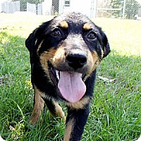 Adopt A Pet :: Kennedy - Savannah, GA