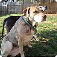 Adopt A Pet :: Odessa - Madison, WI