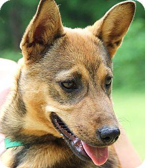 German Shepherd Dog Mix Dog for adoption in Pewaukee, Wisconsin - Cria