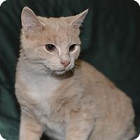 Adopt A Pet :: Pringle - Medina, OH