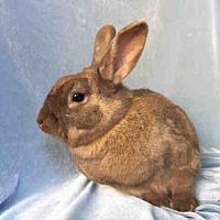 Adopt A Pet :: ARCHIE - Goleta, CA
