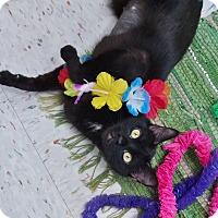 Adopt A Pet :: Barracuda - Chambersburg, PA