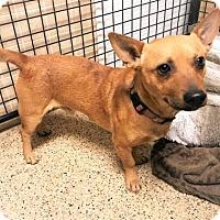 Adopt A Pet :: Banjo - Tempe, AZ