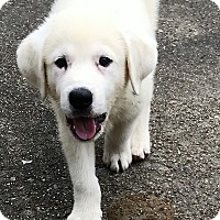 Adopt A Pet :: Zander - Kyle, TX