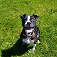 Adopt A Pet :: Addie *Read entire description - Spokane, WA
