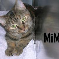 Adopt A Pet :: MIMI - Franklin, NC