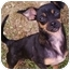 Photo 1 - Chihuahua Mix Dog for adoption in Paintsville, Kentucky - Snuggles