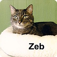 Adopt A Pet :: Zeb - Medway, MA