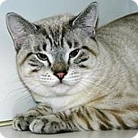 Adopt A Pet :: Telous - Cheyenne, WY