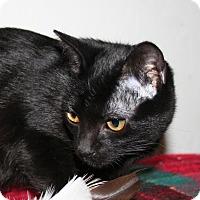 Adopt A Pet :: Aurora - Santa Rosa, CA