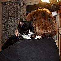 Adopt A Pet :: Domino - Portland, ME