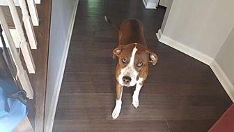 Terrier (Unknown Type, Medium) Mix Dog for adoption in Summer Shade, Kentucky - TWIX