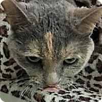 Adopt A Pet :: Lexi - Medina, OH