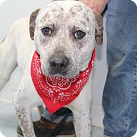 Adopt A Pet :: Thor*FOSTER NEEDED!* - Chicago, IL
