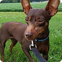 Adopt A Pet :: Sprocket - Tremont, IL