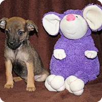 Adopt A Pet :: Guac - Washington, DC