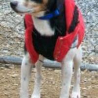 Adopt A Pet :: Stevie - Huntingdon, PA