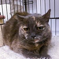 Adopt A Pet :: Adriane - Webster, MA