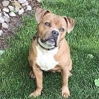 Adopt A Pet :: TILLY - Linden, NJ