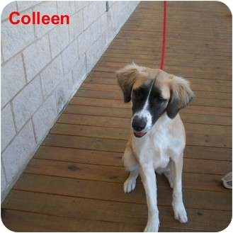 Collie Mix Dog for adoption in Slidell, Louisiana - Colleen