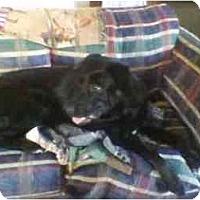 Adopt A Pet :: ARIZONA - latrobe, PA