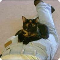 Adopt A Pet :: Moki - Washington Terrace, UT