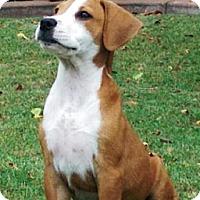 Adopt A Pet :: Franco - Gilbert, AZ