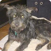 Adopt A Pet :: Harvey - Norman, OK