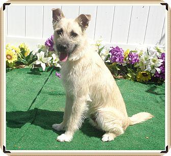 Terrier (Unknown Type, Small) Mix Dog for adoption in Marietta, Georgia - BENJI
