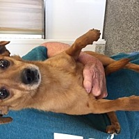 Terrier (Unknown Type, Medium) Mix Dog for adoption in Fresno, California - Kimmy