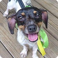 Adopt A Pet :: Malaki - Baton Rouge, LA