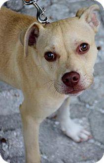 Hound (Unknown Type) Mix Dog for adoption in Bradenton, Florida - Sophia