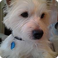 Adopt A Pet :: Tucker-Pending Adoption - Omaha, NE