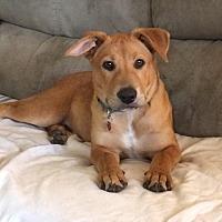 Adopt A Pet :: Chester - Miami, FL