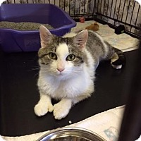 Adopt A Pet :: Keaton - Byron Center, MI