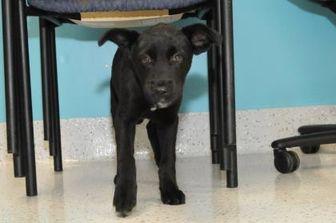 Mixed Breed (Medium) Mix Dog for adoption in Batavia, Ohio - Quill