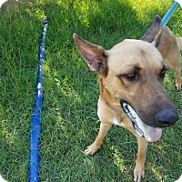 Adopt A Pet :: Plex - Austin, TX