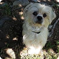 Adopt A Pet :: Lilly - San Dimas, CA