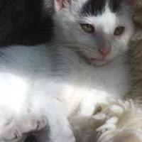 Adopt A Pet :: Freckles - Santa Cruz, CA