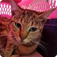 Adopt A Pet :: MK - Henderson, KY