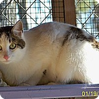 Adopt A Pet :: Joanie - Dover, OH
