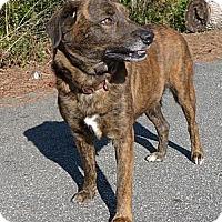 Adopt A Pet :: Nancee - Mocksville, NC