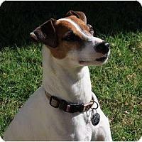 Adopt A Pet :: JACK BARR - Scottsdale, AZ