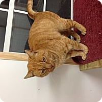Adopt A Pet :: Henry - Aiken, SC