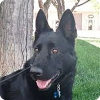 Adopt A Pet :: Sophie - Denver, CO