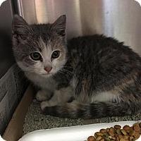 Adopt A Pet :: BJ - East Brunswick, NJ