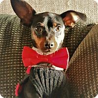 Adopt A Pet :: Ace - Sacramento, CA