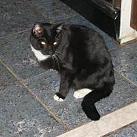 Adopt A Pet :: Destiny aka Dennis - Brooklyn, NY